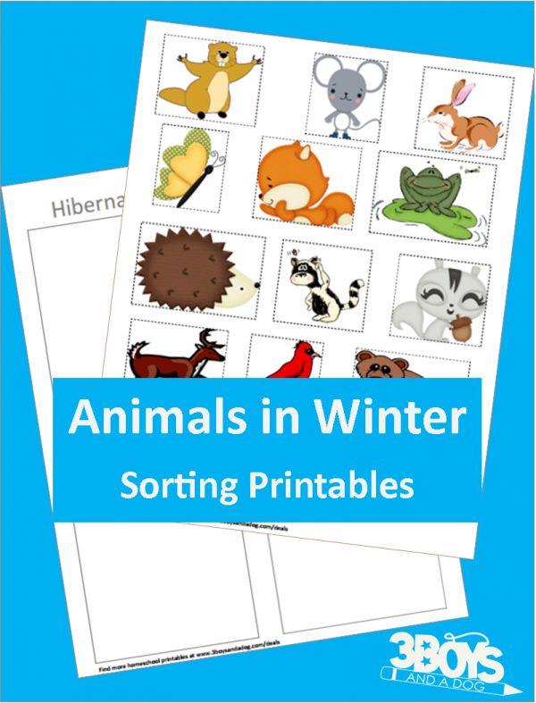 206 Best Winter Animals In Incl Hibernation Images On Pinterest