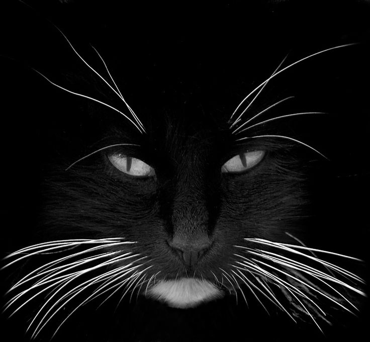 Whiskers ...one of the best feline fotos I've seen in a long time!