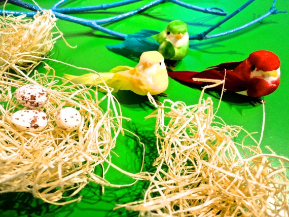 """Our only kit with real """"nesting""""material. So fun!"""