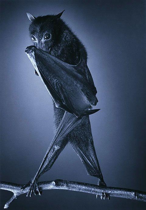 Bat by Flach