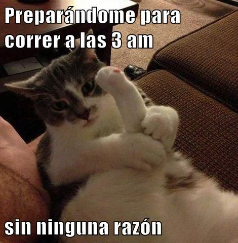 Así es mi gatita!