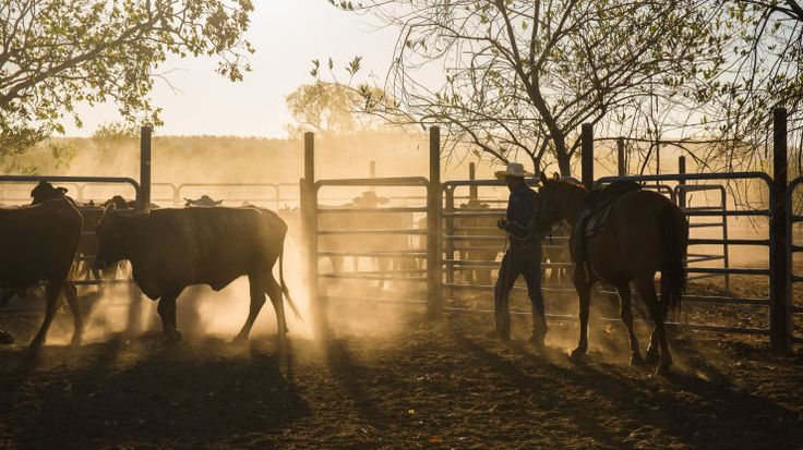 5 of the Best Dude and Guest Ranches in the Texas Hill Country Near Austin