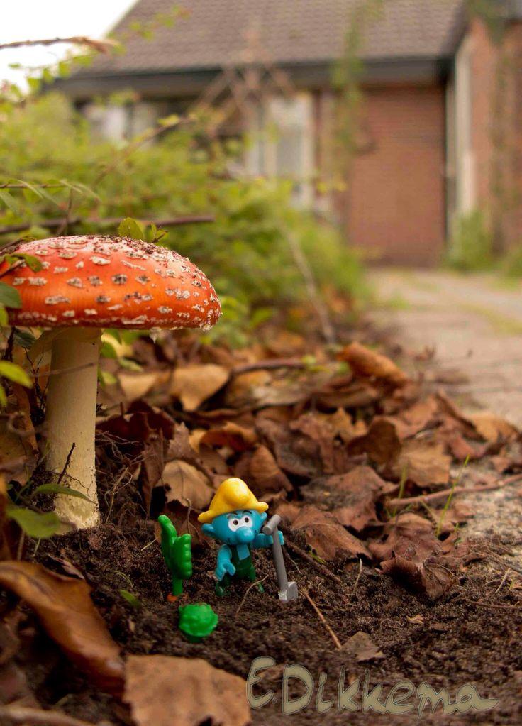 Herfst fotografie. Een nieuwe tuinman aangenomen :-)