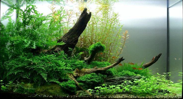 wat is aquascaping? - Google zoeken