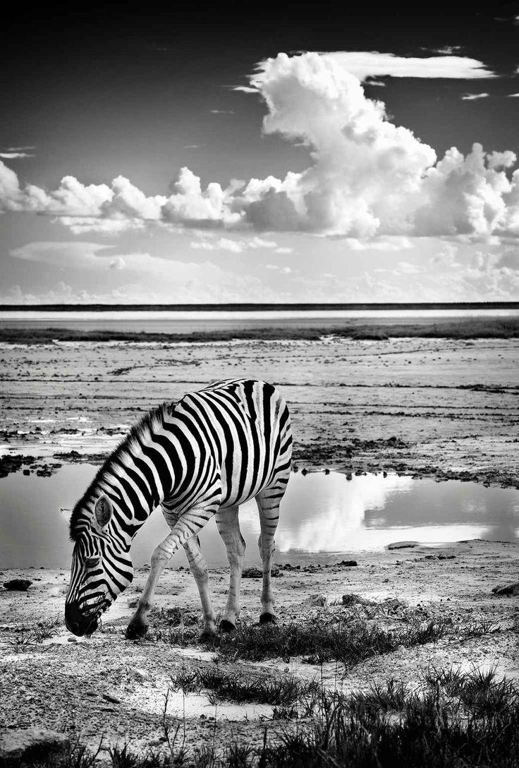 u00c9pingl u00e9 par erika m u00f8rup sur zebra