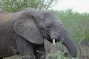 http://www.traveladvisortips.com/gorah-elephant-camp-review/ - Gorah Elephant Camp Review