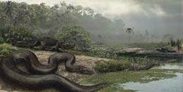 Scientists find world's biggest snake 'Titanic' boa fossils provide clues to past tropical climate.Researchers have found fossils of the biggest known snake in the world, a discovery that could shed light on the climate of the tropics in the past.The scientists estimate the snake lived 58 to 60 million years ago and was around 13 metres long. The giant, found in northeastern Colombia.