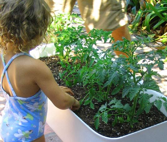 container gardening, sustainable gardening, urban garden, green thumb, sustainable agriculture, plant, herb garden, home vegetable garden