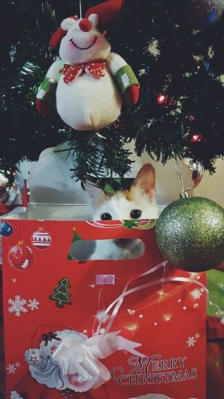 My first merry christmas with my love ♡ #cat #marrychrismas #love #partner # happy #love&love