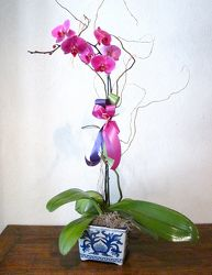 I love having fresh orchids in my home and office