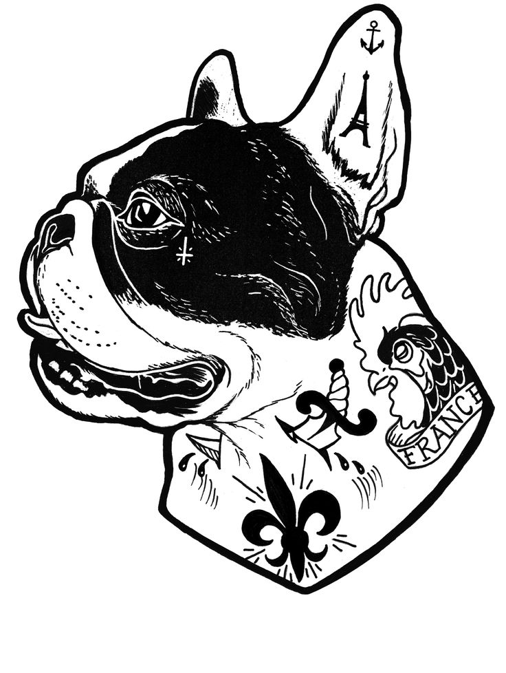 Tattooed French Bulldog