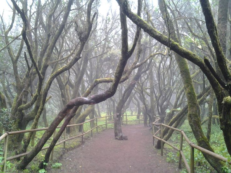 **Garajonay National Park, La Gomera: See 569 reviews, articles, and 490 photos of Garajonay National Park, ranked No.1 on TripAdvisor among 55 attractions in La Gomera.