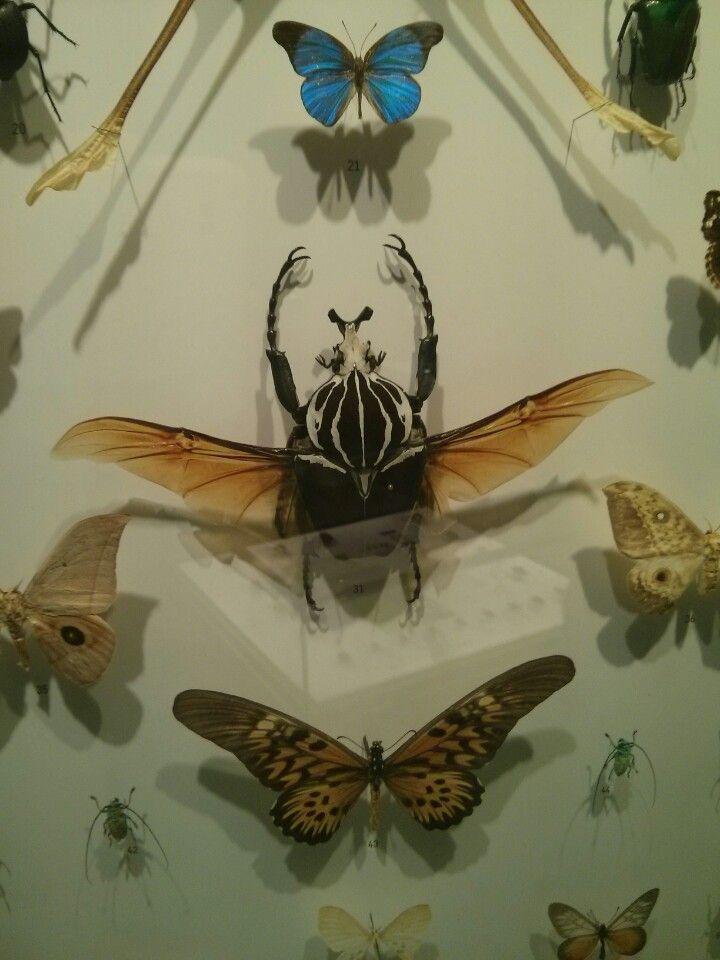 Insectarium de Montréal