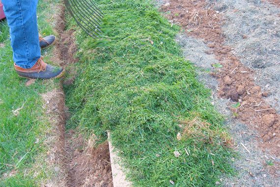 annual lawn care schedule bing images