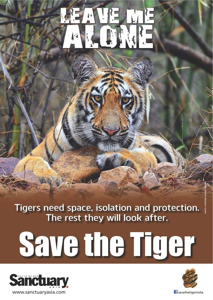 save our tigers essay Check out our top free essays on save our tigers to help you write your own essay.