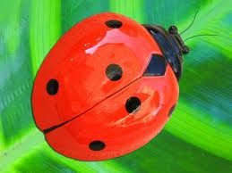 Tennesse has 2 Official insects, Fireflies and Ladybugs