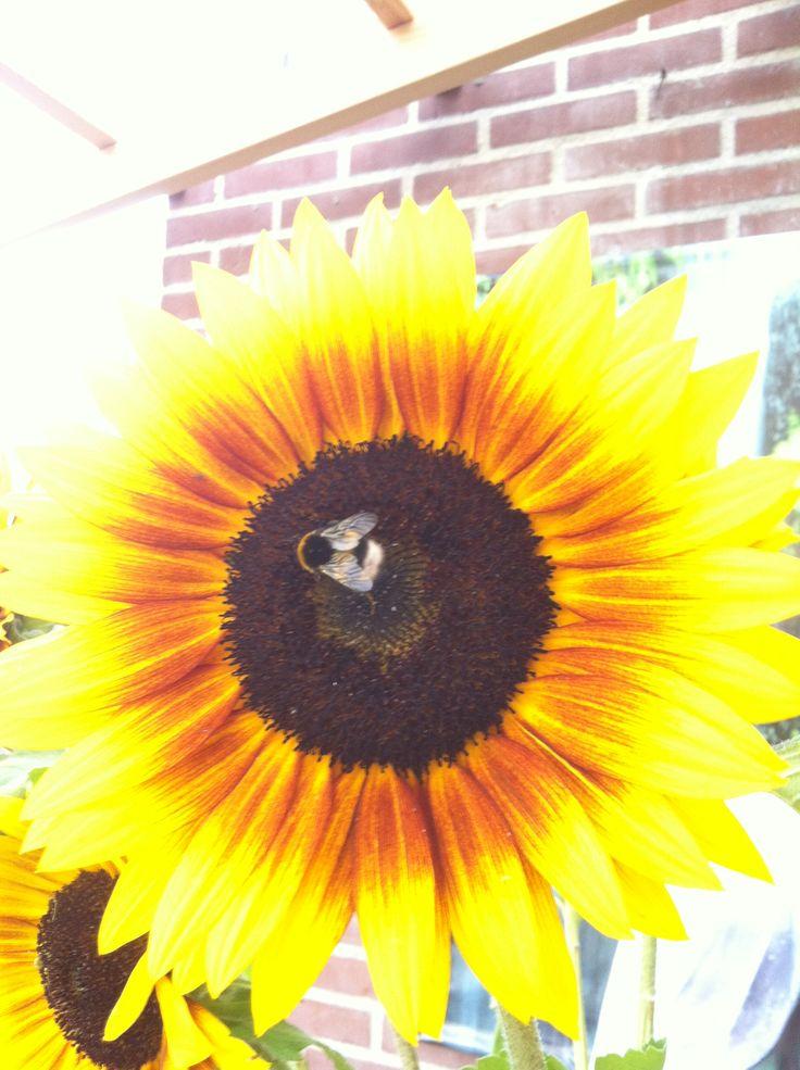 Die van de bloemetjes en de bijtjes...
