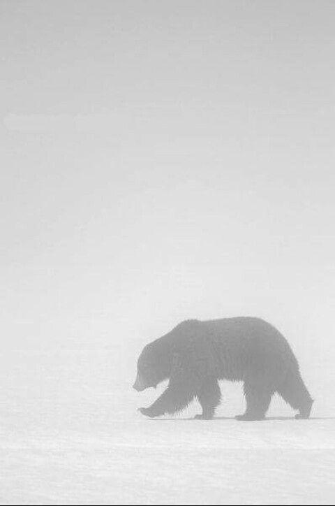 114 besten Bears Bilder auf Pinterest   Baby bär, Lustige tiere und ...
