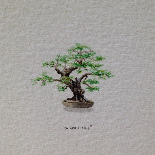 Day 116 : A bonsai for my very dear friend, James Boonzaier (thanks for the idea, Cath). Happy birthday Jameson. 29 x 23 mm. #365paintingsforants #bonsai (at Vredehoek)