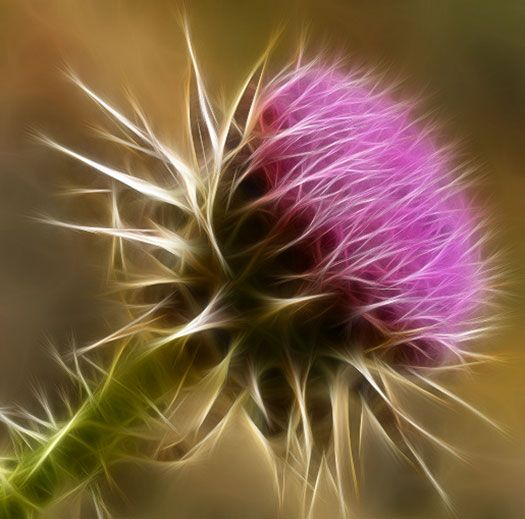 I probably shouldn't plant these, but I actually really like thistles. Maybe it's my Scottish heritage?