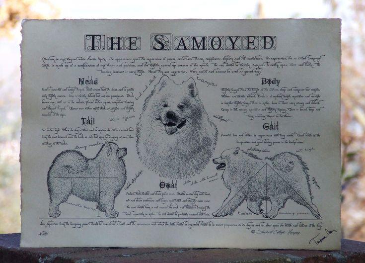 Antique styled dog standard - Samoyed by Creativedoglover on Etsy