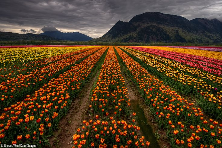 amazing: Favorite Places, Breathtak Landscape, Flower Power, Amazing Amazing, Flower Fields, Favorite Pin, Beautiful Things, Landscape Photographers, British Columbia