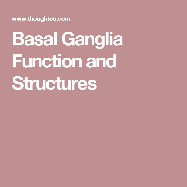 Basal Ganglia Function and Structures