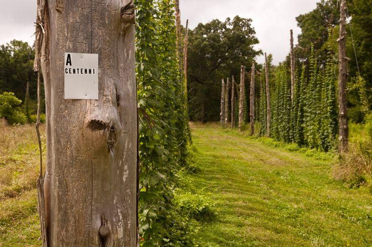 66 best images about trellis design on pinterest gardens for Hops garden designs
