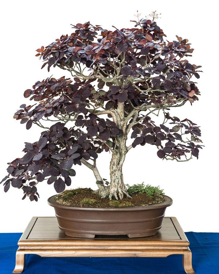 25 best ideas about bonsai baum on pinterest. Black Bedroom Furniture Sets. Home Design Ideas