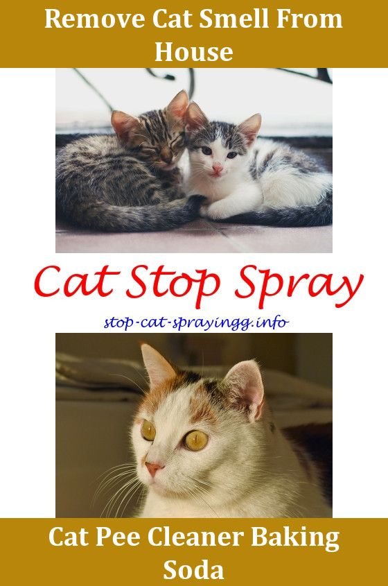 Anti Cat Urine Spray Removing Cat Urine Smell From Furniture Cat Peeing Meme Cat Pee Removal