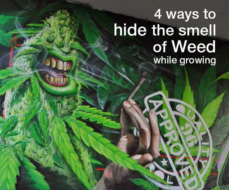 Smart ways to hide the smell of weed while growing marijuana. The most effective way is to use a carbon filter in your grow room or grow tent.