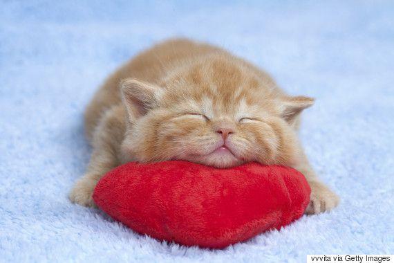 11 razones científicas que demuestran que tener gatos es bueno para la salud