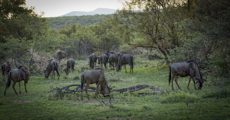 Interesting Facts and Activities — Warthog Lodge, holiday home rental |Situated in Mabalingwe Nature Reserve | Bela-Bela, Limpopo, South Africa |