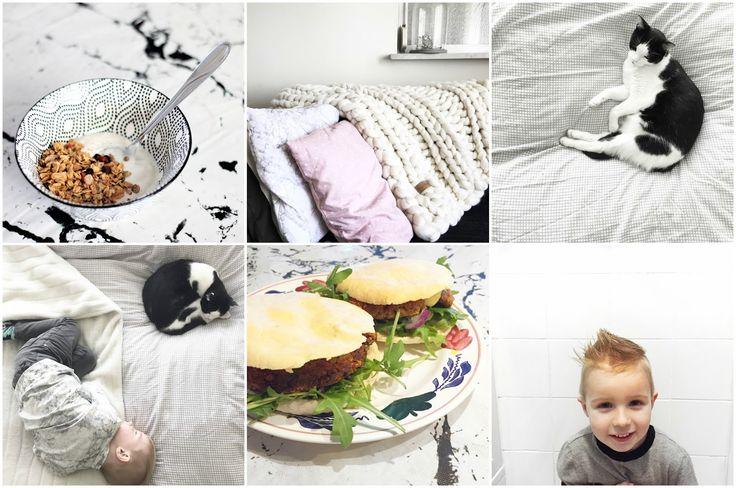 project 365, photochallenge, 365 days challenge, dani and mom, daniandmom, foto, foto's, photo, photos, challenge, foto challenge, foto reeks, foto serie, fotografie, fotografe, spiegelreflex, waalwijk, kaatsheuvel, sprang-capelle, loon op zand, brabant, midden brabant, portret, food, voedsel, eten, dieren,  huisdieren, kind, kinderen, kids, gezin, familie, ontbijt, taart, taarten, feest, verjaardag, verjaardagstaart, kidsfashion, kinderkleding, monochroom, monochrome, kat, poes, siep, ji...