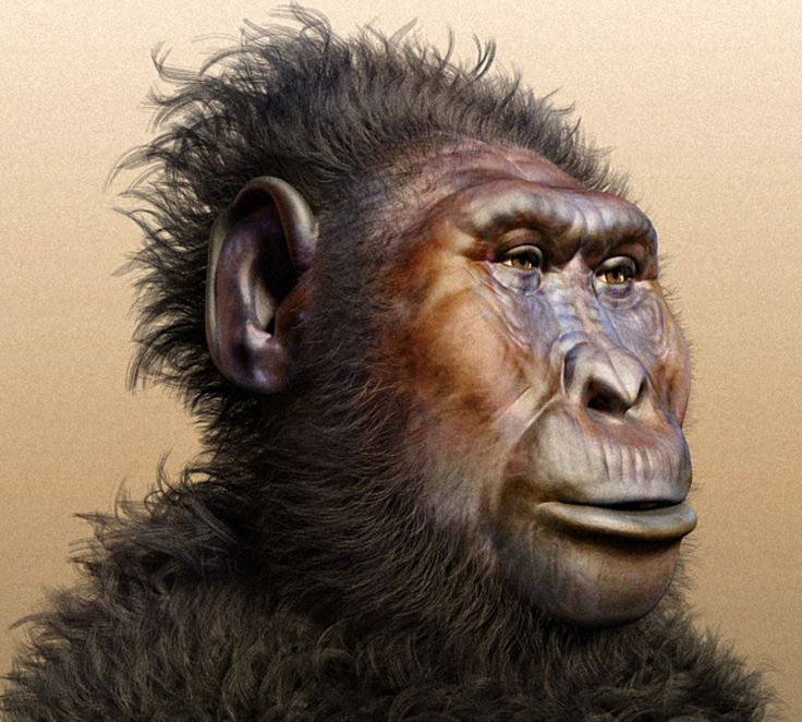 A forensic facial reconstruction of Paranthropus boisei. Image credit: Cicero Moraes / CC BY-SA 3.0.