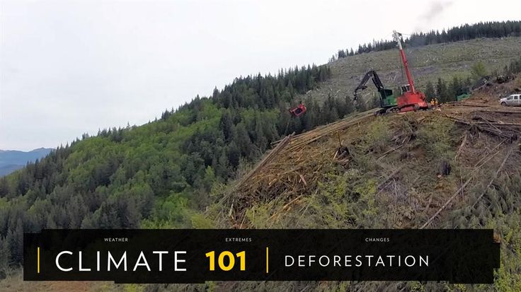Forests cover about 30% of the planet, but deforestation is clearing these essential habitats on a massive scale. What is deforestation? Find out the causes, effects, and solutions to deforestation.