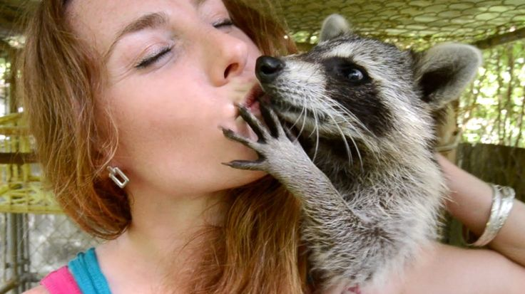 Rescuing Baby Raccoons - How to feed and raise coon babies   (07.25.14)