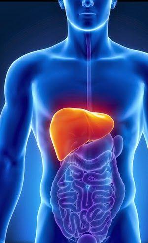 Fígado: onde nasce o verdadeiro equilíbrio emocional – Portal Arco Íris-Núcleo de Integração e Cura Cósmica