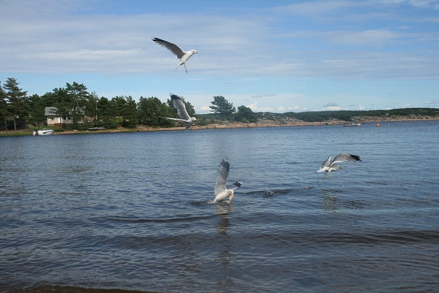 Hvaler 17. juli, via Flickr.
