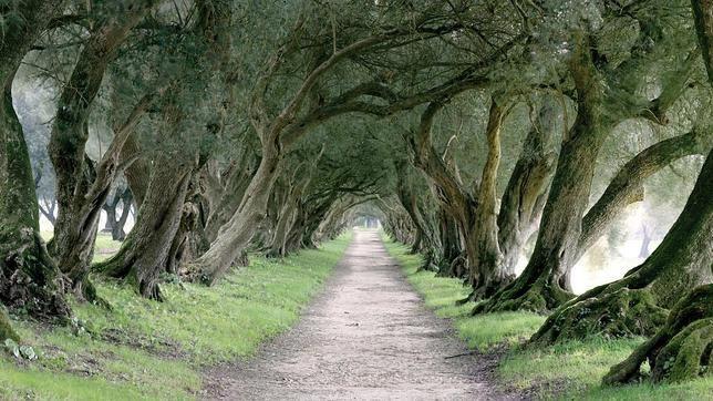 Galicia. Camino arbolado en el Pazo de Santa Cruz de Ribadulla Los pazos y jardines más bellos de Galicia donde ver camelias