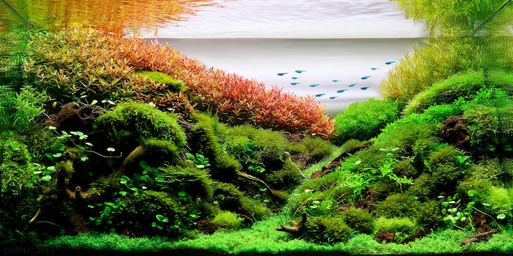 the 2nd Round Grading, TOP 200 Layouts   The International Aquatic Plants Layout Contest, IAPLC