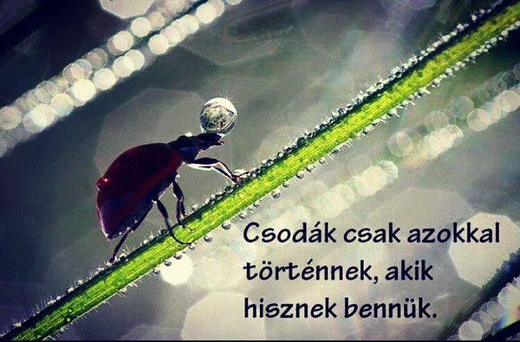 """""""Csodák csak azokkal történnek, akik hisznek bennük."""" Csatlakozz te is hozzánk: https://facebook.com/magyarzeneikultura  #zene #alapitvany #alapítvány #foundation #zenei #magyarzeneikultura #idezet #quote #hungarian #segits #magyar #budapest @magyarzeneikultura #adomanyozas #kultura #segits #helpme #helpmeplease #followme #followmeplease #like #thankyou #koszonjuk"""