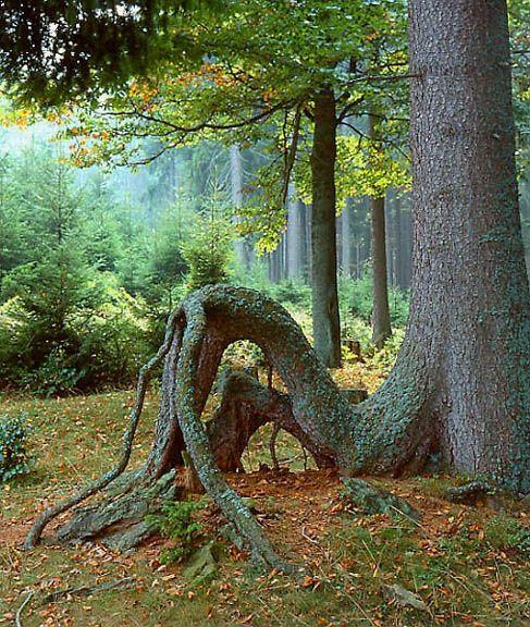 Šumava
