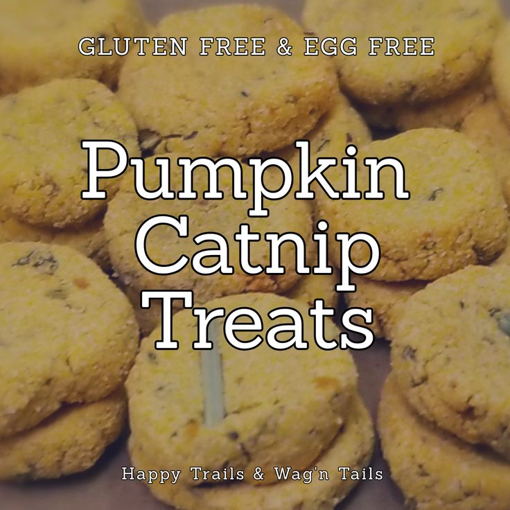 Homemade GF Pumpkin Cat Treat And Vegan Dog Treat In 2020