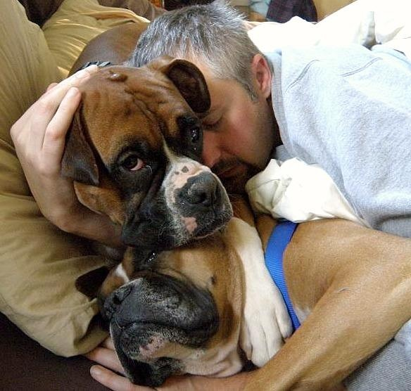 """Second Chance Boxer Rescue - After looking at the picture I am hearing in my head """"Clowns to the left, Jokers to the right, Here I am Stuck, in the middle with you""""! *lol*"""