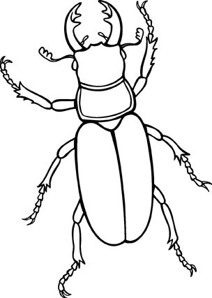 lp_i_ff_img04_beetle.gif (304×427) | Coloring | Pinterest ...