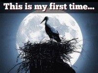 """""""My first time!"""" - A Haiku Deck #setyourstoryfree"""