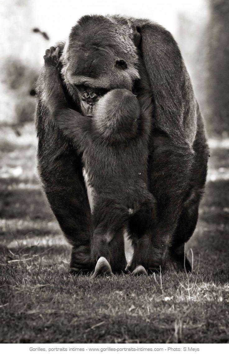 Gorillamama und ihr Baby   – coups de coeur