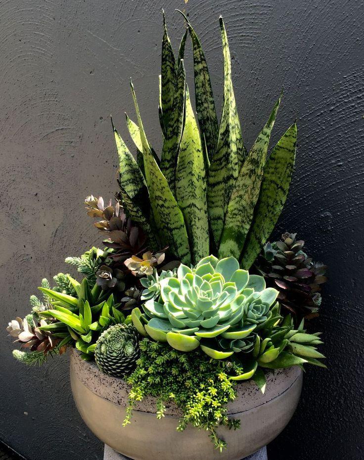 schöne Sukkulenten und Pflanzen zusammen   – Living Wall Structures