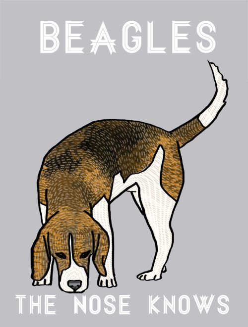 Beagles, the nose knows. By Adriana Willsie
